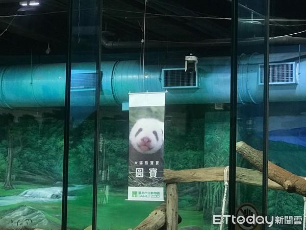 快讯/大熊猫圆仔妹命名「圆宝」 乳名「柔柔」第二名
