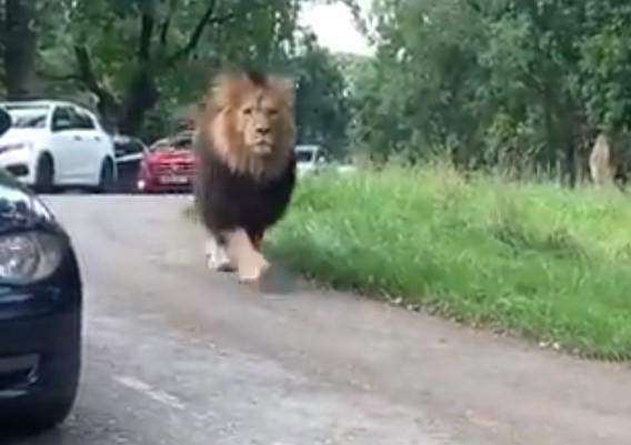帕金斯转发前球员偶遇狮子视频:这是巴特勒在园区溜达