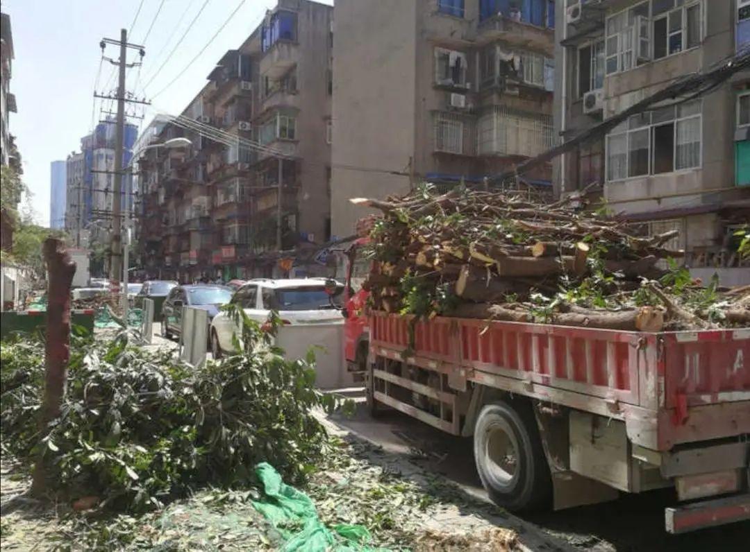 关于成都桂花巷砍树事件,住建部通报来了