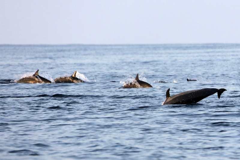 漫漫护航路 海豚常伴行