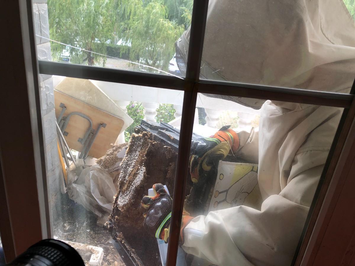 吓人!居民阳台洗衣机底盘下,竟然藏了个巨大的马蜂窝