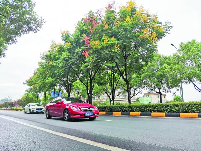 """金华日报丨秋天真要来了!市区行道树中的""""颜值担当""""开花了!在这些地方都可以欣赏到"""