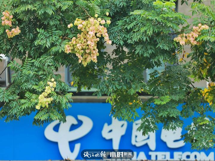 街头摄影节㉛|无论哪个角度,都能拍出一张有感情的秋日好照片