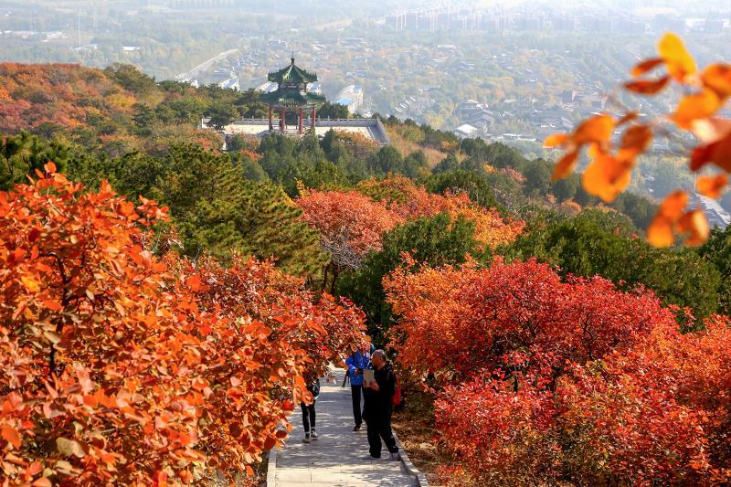 """秋色撩人!北京""""官宣""""19处彩叶观赏区,不必扎堆儿去香山"""