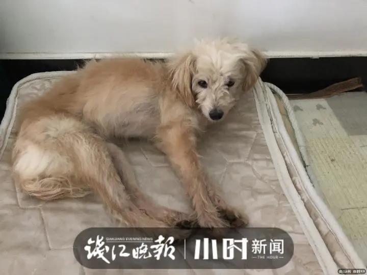 杭州7岁小狗被落服务区,流浪26天找回了60多公里外的家