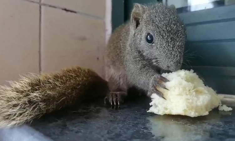 上海七宝消防站的香樟树掉下来一只小松鼠:与消防员一样早晨出操,晚上休息