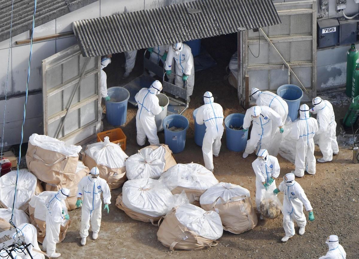 日本香川县暴发禽流感疫情