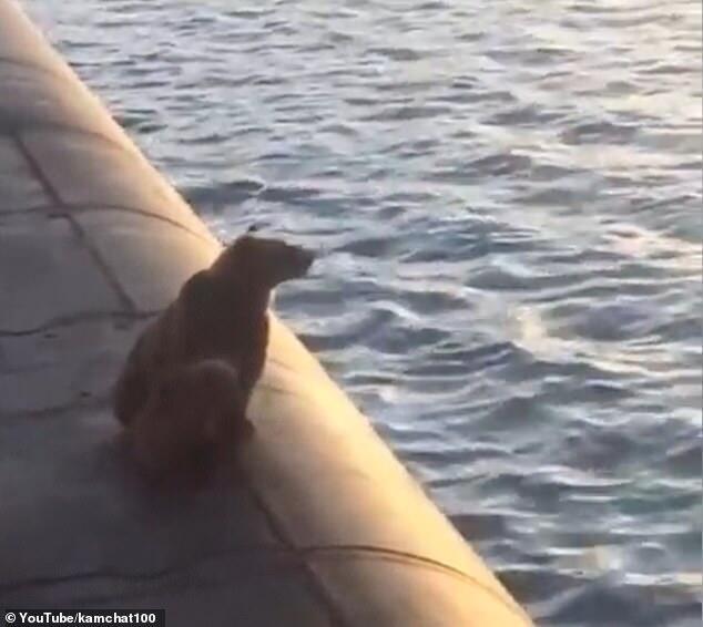 """熊母子爬上潜艇遭""""枪击""""引发愤怒,俄罗斯海军:别无选择"""