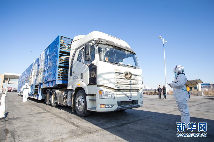 最后一批蒙古国捐赠羊抵达中国