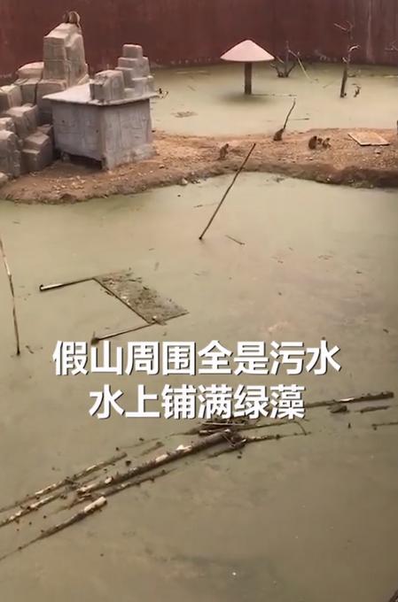动物园回应猴谷环境恶劣:地势低无法排出雨水,正准备转移猴子