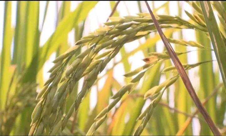博白:大力发展富硒产业,促进农业提质增效
