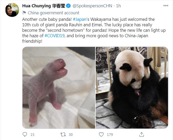 又一熊猫宝宝在日本诞生,华春莹用英日双语发推送祝福