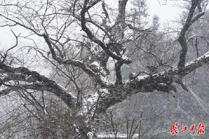 湖北一地下雪了,武汉是不是也不远了