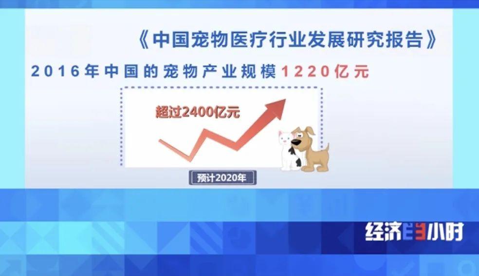 宠物也针灸、面部识别……市场规模或超2400亿元!网友:别再云吸猫了