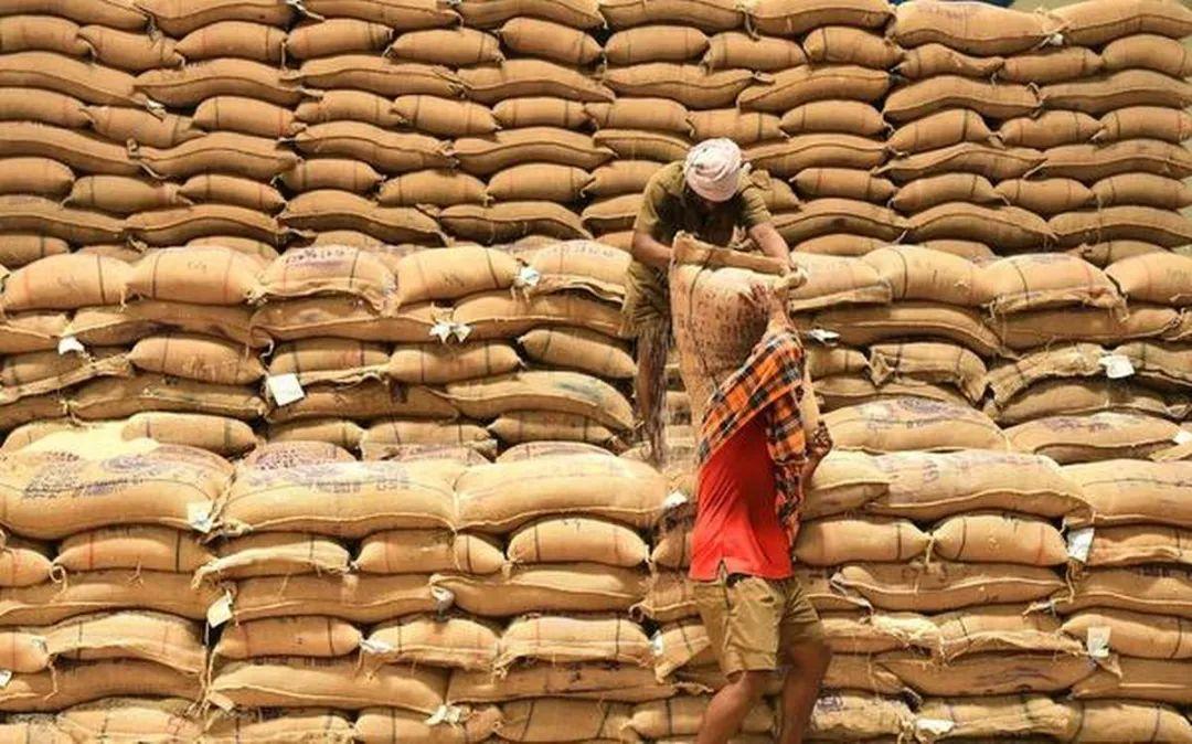 """印度""""打折""""向中国出口大米"""