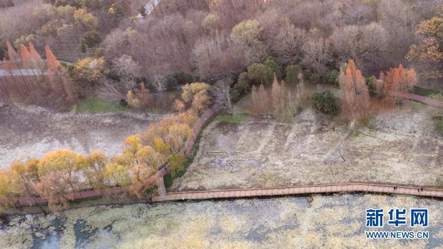 江苏扬州:公园冬景如画