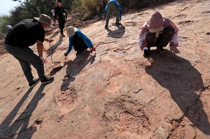 距今8000万年、240余枚!福建上杭首次发现恐龙足迹群