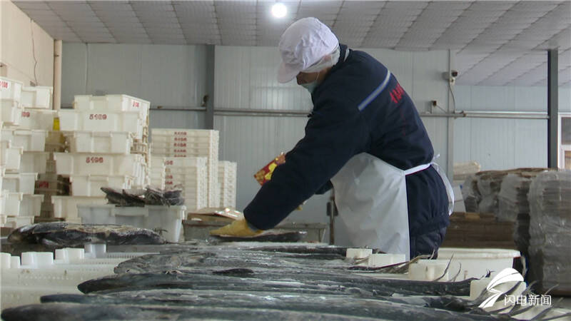 青岛:晒鱼晒虾晒丰收晒出腊月好年景