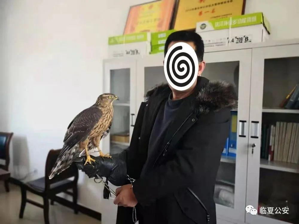 我护你长空翱翔—临夏县公安局侦破非法猎捕运输野生动物案件纪实