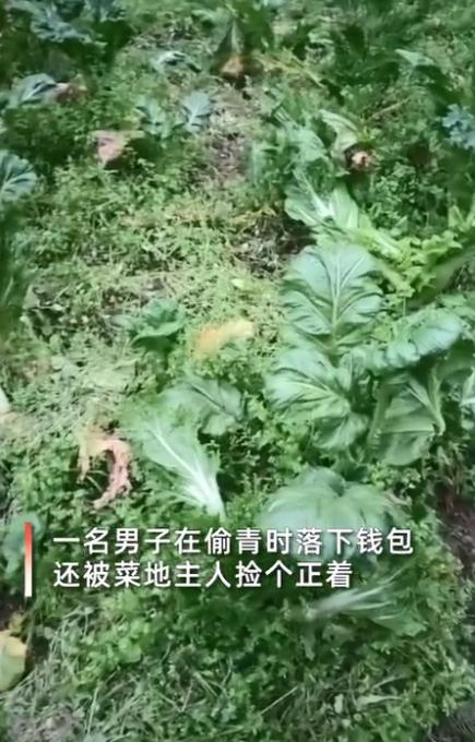 贵州女子发现自家白菜被偷,地里意外捡到小偷钱包打开一看笑出声