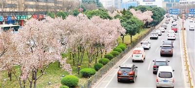 西安城满眼新绿惹人醉 行人尽享满城春色