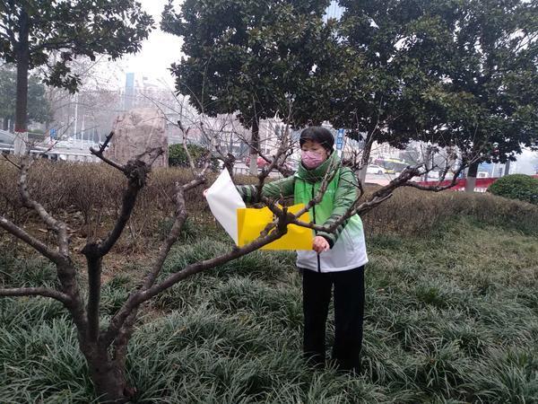 """漯河树木穿上黄色""""腰带"""",有效防治园林植物病虫害 园林病虫防治 第2张"""