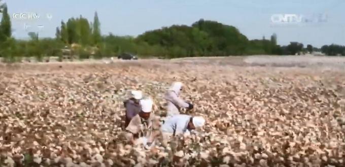 多图!航拍新疆棉花,咱们新疆的美,不容肆意抹黑