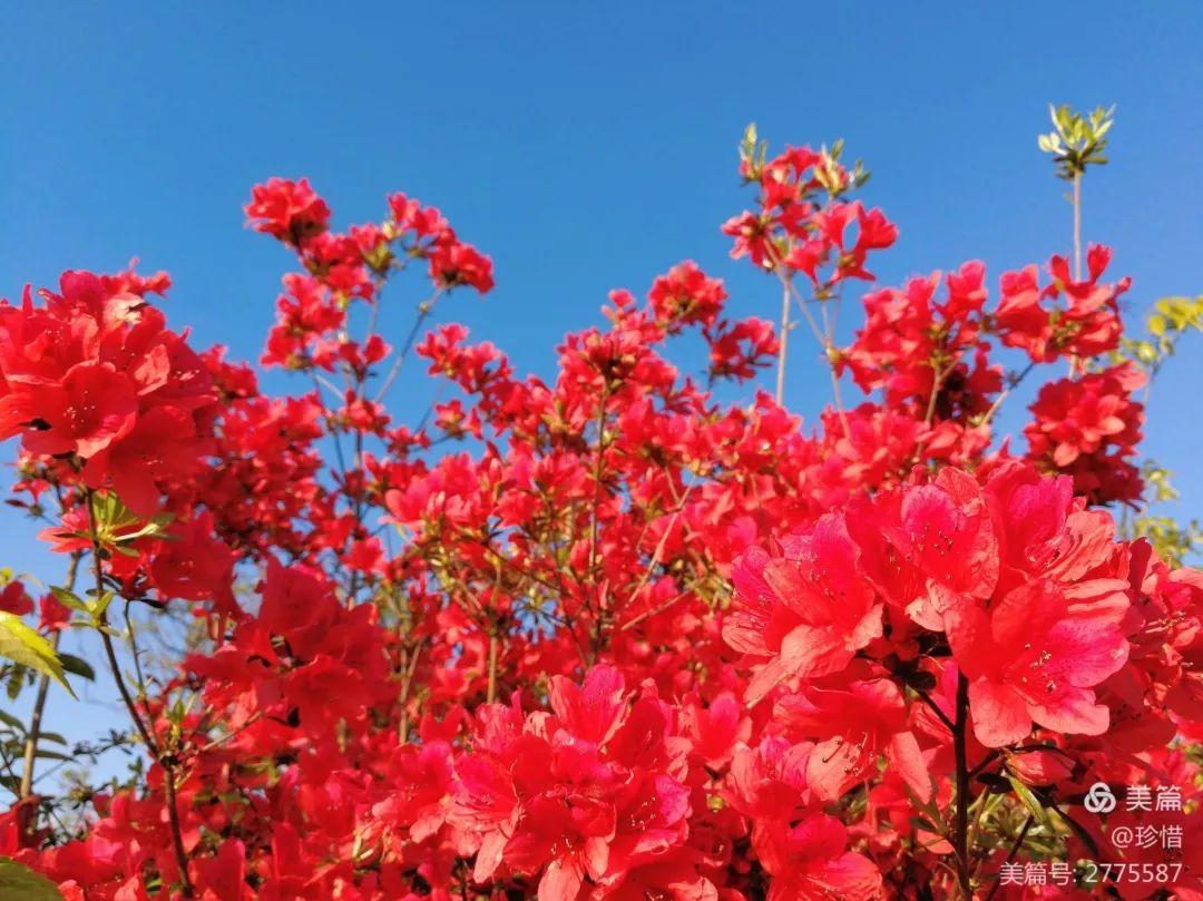 """丽水出现""""火烧云""""美景,大片粉红花海美到开挂,假期带家人走起……"""
