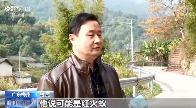 警惕!广东一村民被红火蚁咬后休克,网友:最担心的事情还是发生