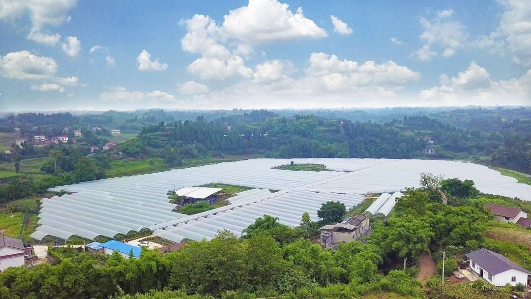 全市第一!四川省自贡市金奎大被批准建立国家农村产业整合发展示范园区