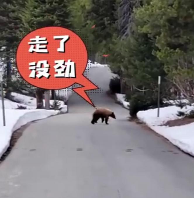 心理素质绝了!美国男子倒走1公里摆脱饥饿黑熊,开始时还跟它讲道理