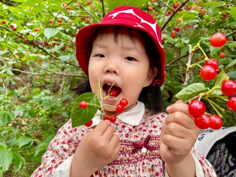 樱桃红艳艳赶快来尝鲜