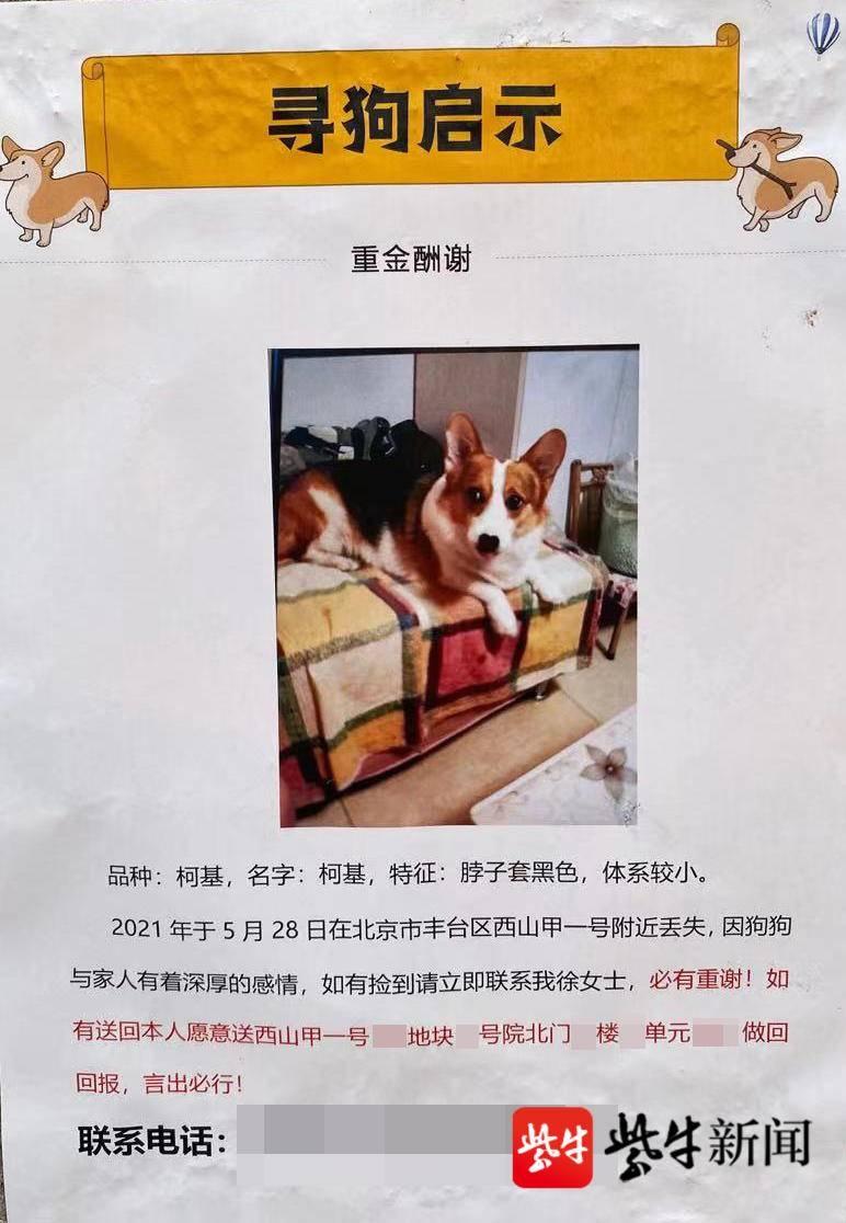 寻狗赠送北京一套房?小区售楼处:寻狗是真的,房子产权受限不能随意赠送