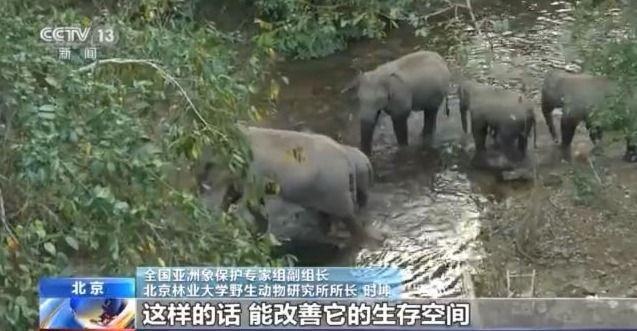 云南野象群在十街乡徘徊多日,专家:或在等待离群小象