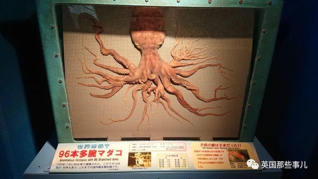 """韩国渔民捕获32条腿""""异形章鱼"""",日本:我们有96条腿的"""