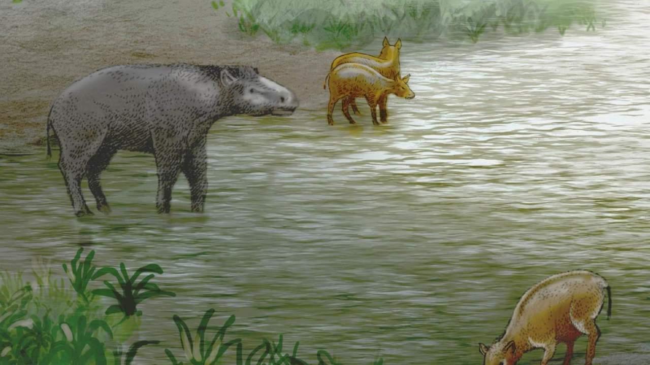 古生物学家发现新的已灭绝伪马物种-第1张图片-IT新视野