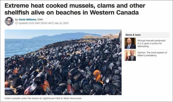 加拿大遭遇极端高温,贝类在海滩直接被烤熟
