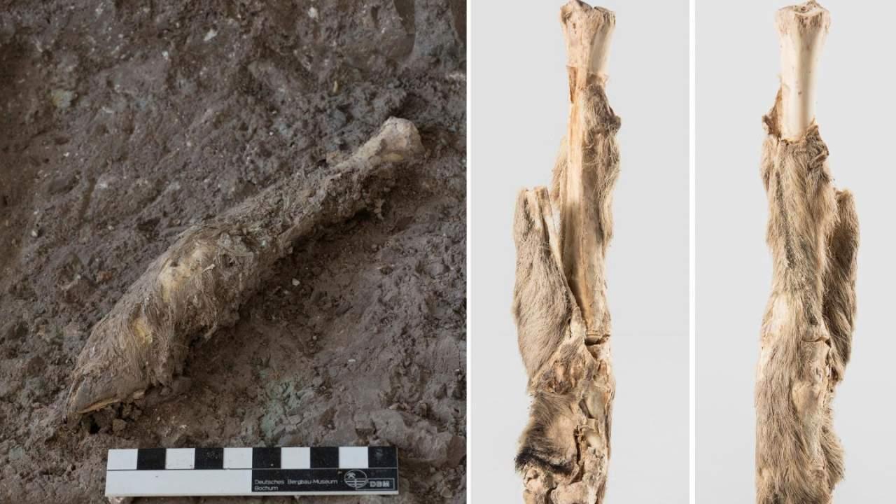 科学家从1600年前的羊腿木乃伊中提取出DNA-第1张图片-IT新视野