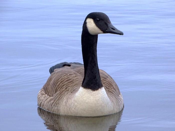 生物入侵正威胁着鸟类和哺乳动物的多样性-第1张图片-IT新视野