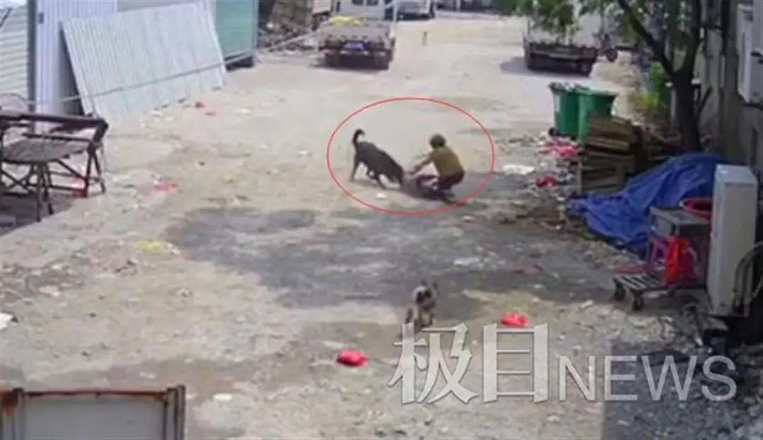 七旬老人被恶犬撕咬身亡 家属发声:狗仍被养着,很气愤