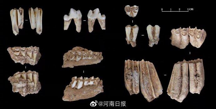 河南鲁山仙人洞遗址发现3.2万年前现代人头骨
