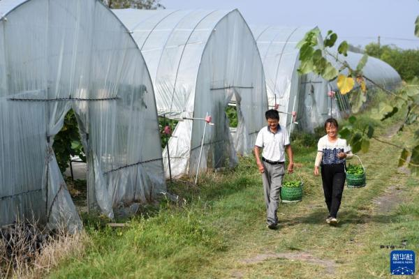 乡村振兴在路上――张俊友、程云夫妇:从贫困户到蔬菜种植能手