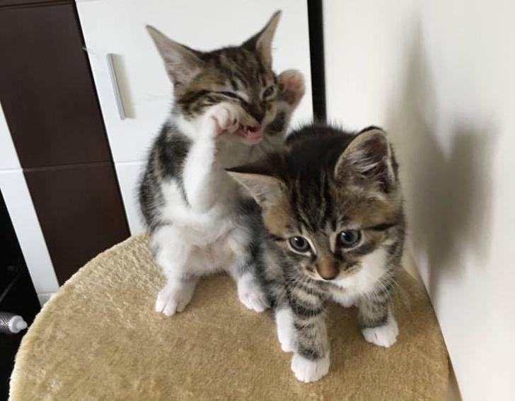 16張貓咪搞笑圖片,告訴你誰才是家里,真正的主子
