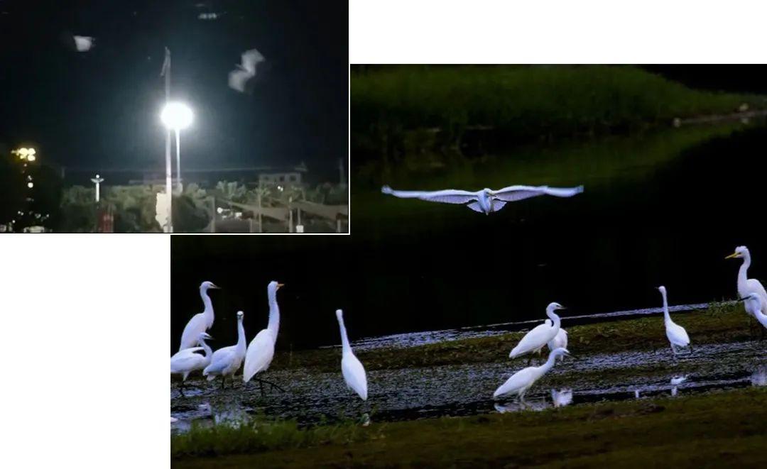 一个县城决定为白鹭熄灯,它还配不上一个热搜?