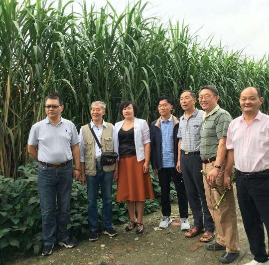 著名草业专家深入大邑金牧粮草种养循环产业基地调研指导