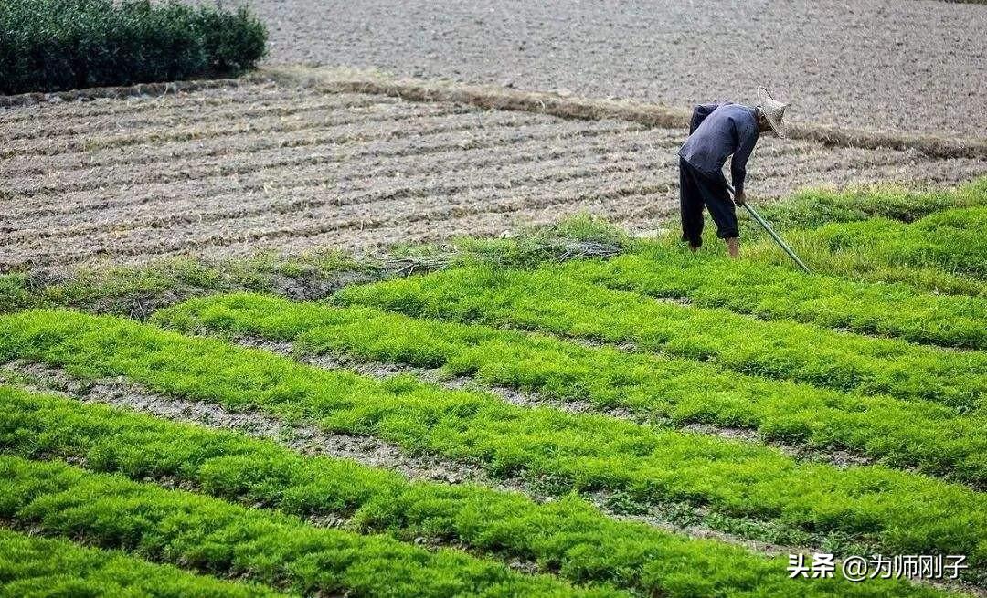 12国限制粮食出口,中国守住18亿亩红线,粮食安全至关重要