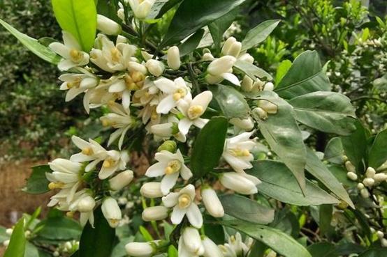 桔堂盆栽花盆栽植物喂养方法 与普遍难点