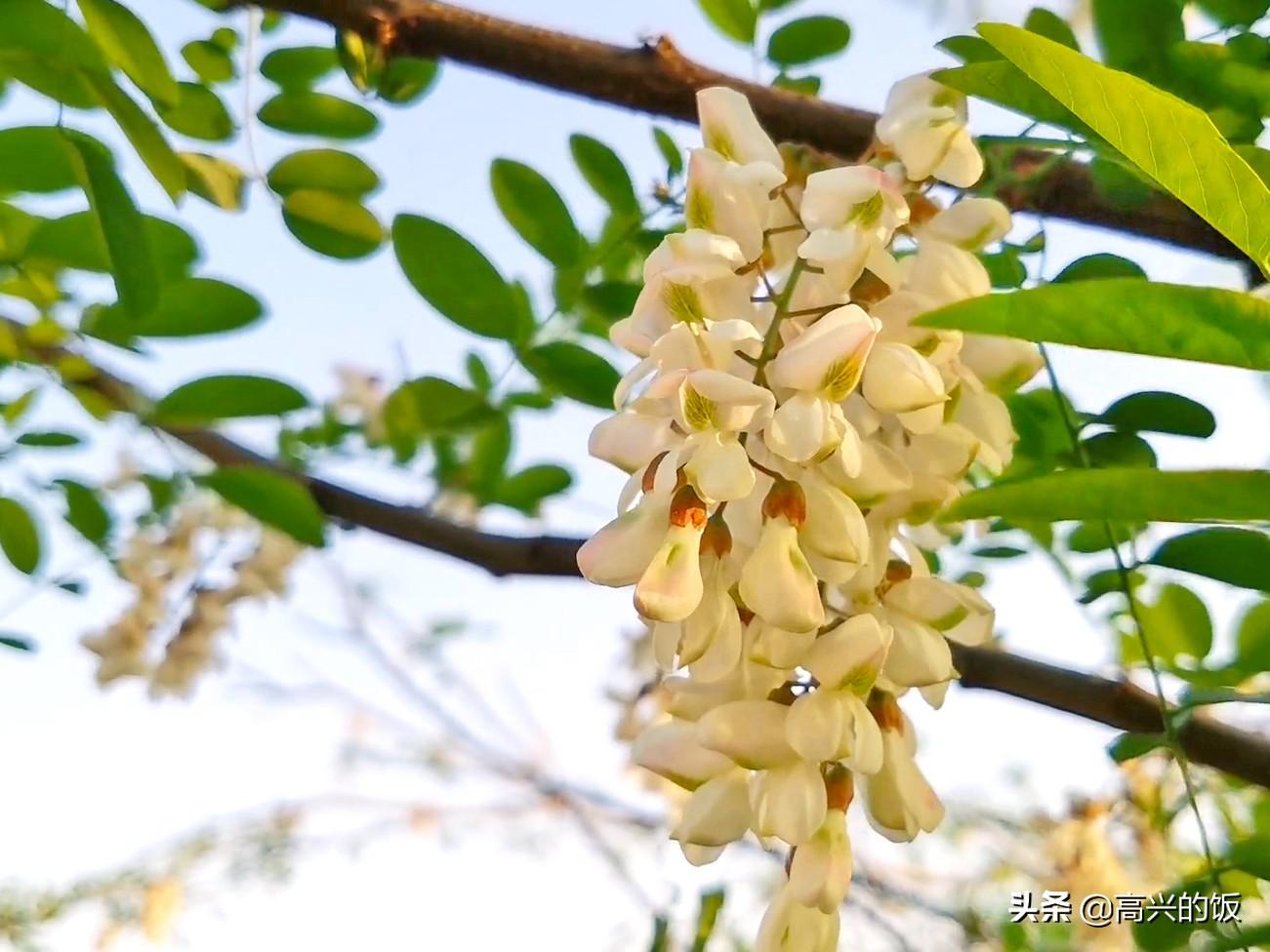 """4月是""""吃花""""的季节,味道清香甘甜,季节性强,早吃早尝鲜 美食做法 第1张"""