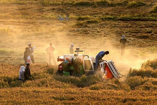 """育種公司""""陰謀""""?為何農民每年要買新種子,自留種子不行嗎?"""