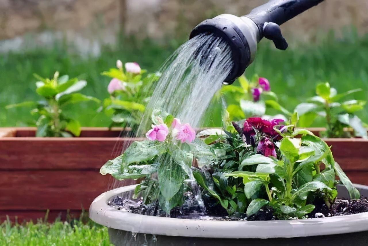 """4月养花,浇水别踩""""4个坑"""",要不然植物黄叶、枯枝、落花苞 家务 卫生 第4张"""